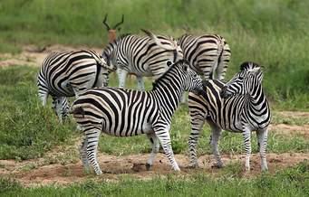 ثبت شرکت درآفریقا